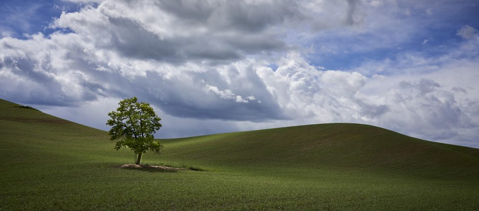 The Classic Lone Tree