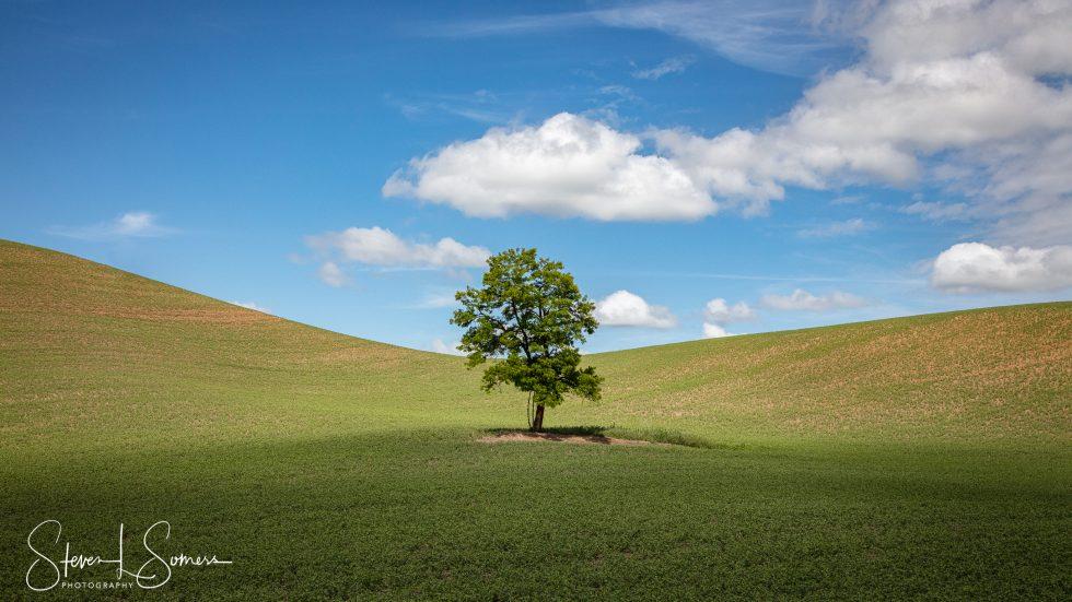 Lone Tree