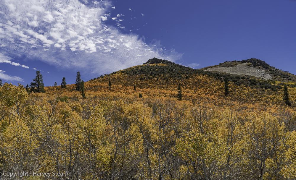 Aspen Grove, Mono Lake Area