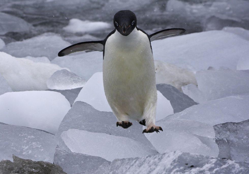 Penguin Funn