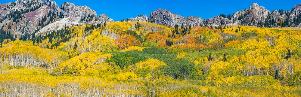 """Kebler Pass Aspen Grove at Peak, Crested Butte, CO, 2010"""