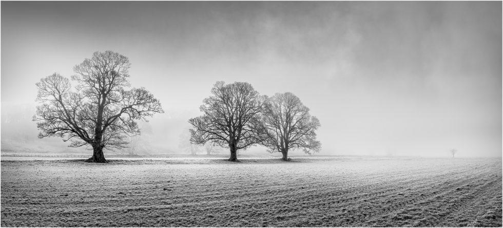 Three trees + one