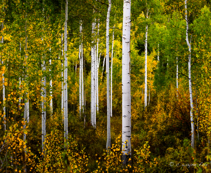 In this image I used Select->Color Range ... to select the white tree trunks and masked the effect out of the trunks, leaving the original detail.