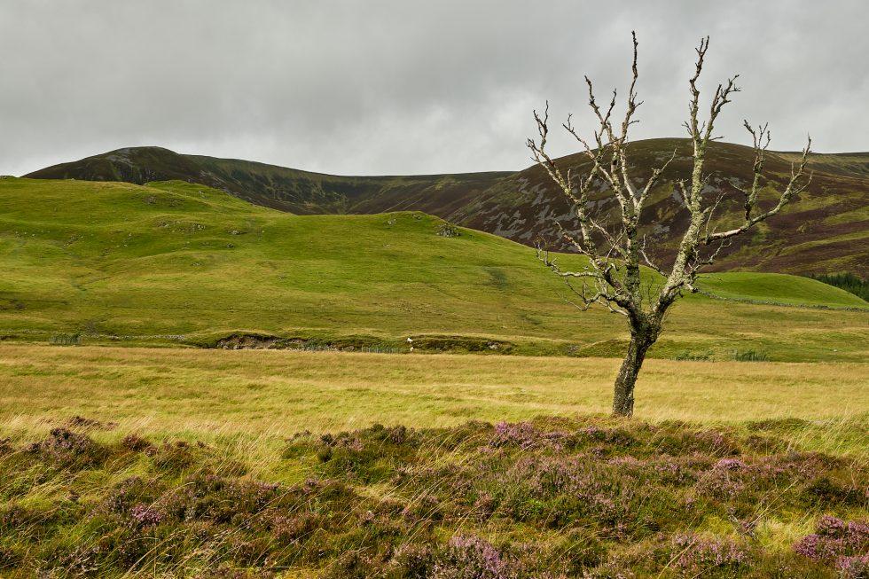 Cairngorms 3