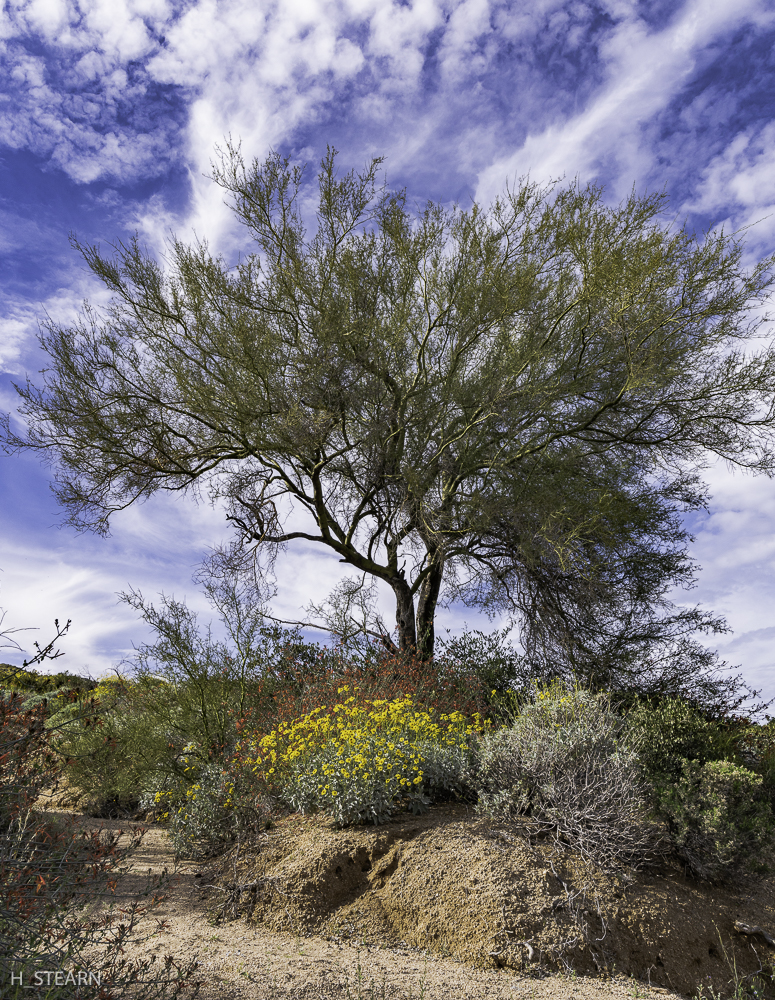 Wild Spring sky over the Sonoran Desert
