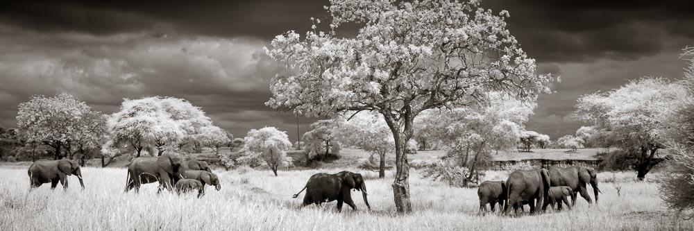 A family of elephants in Tarangire National Park.