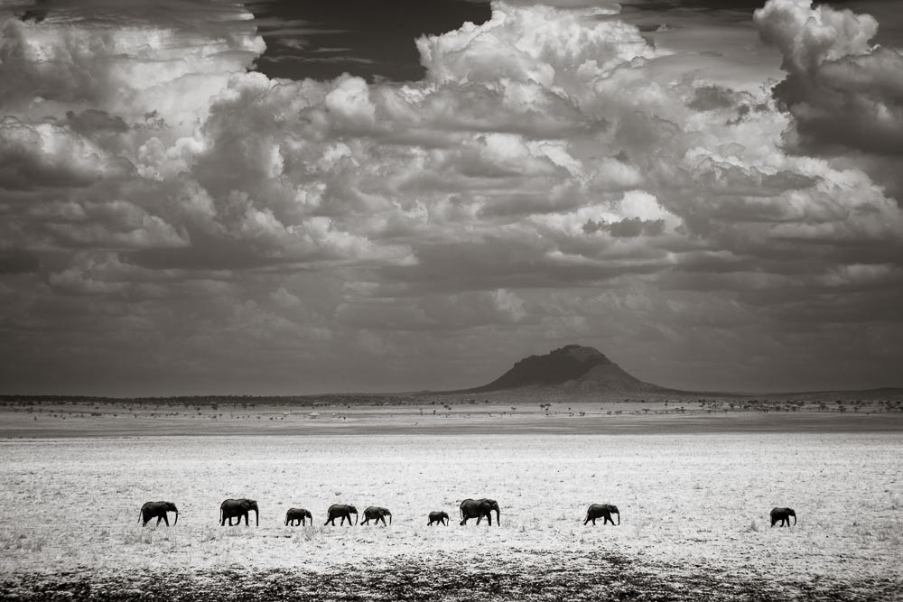 A herd of elephants crossing Silale Swamp in Tarangire National Park. Shot with Canon's 24-105mm lens.