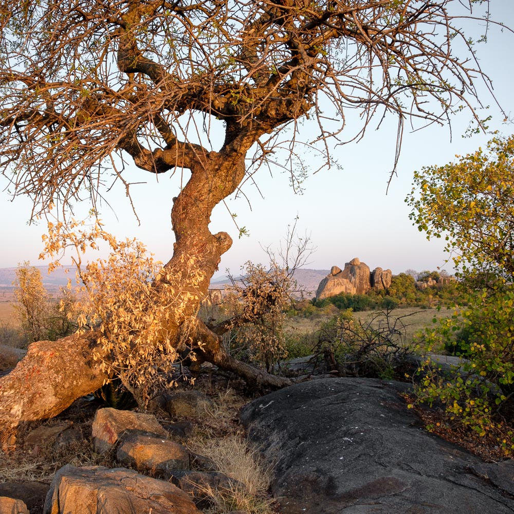 """The """"cell phone tree"""" above camp in the Serengeti."""
