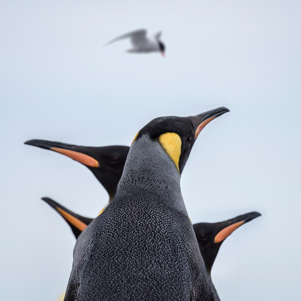 Natural balance. Image shot in South Georgia, Antarctica.