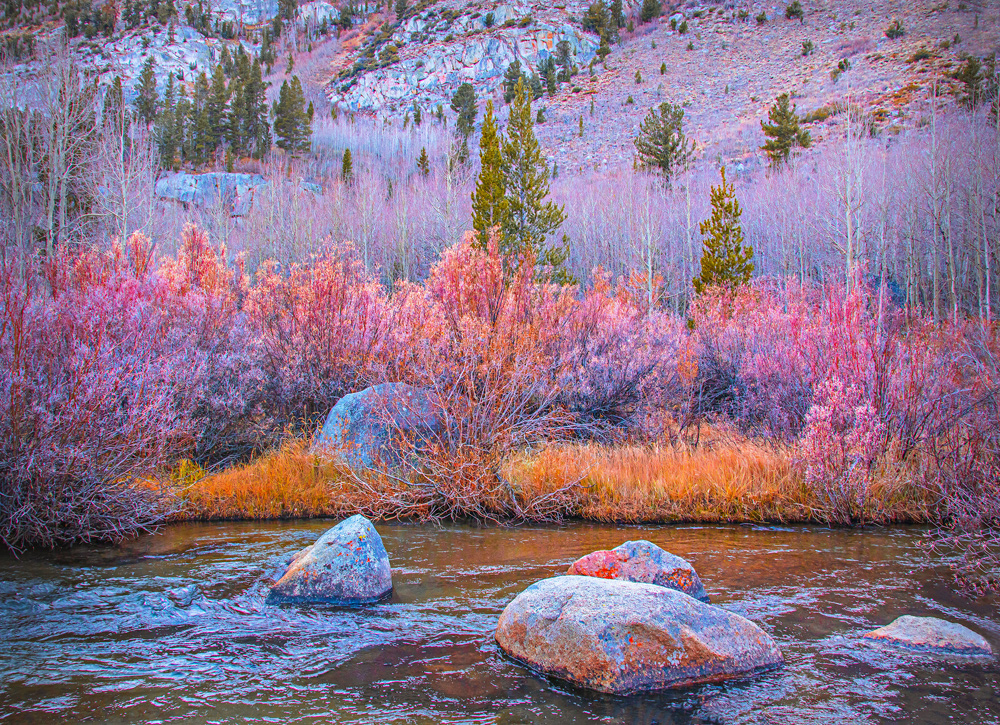 Mauves, pinks and variegated greens, North Creek.