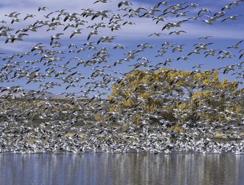 Photographing Wildlife in Bosque del Apache, NM