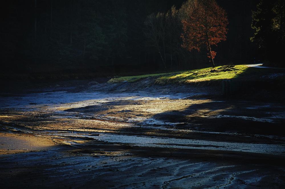 Hagerwald Seegrund (Canon RP, Zeiss Sonnar 2,8/85mm)