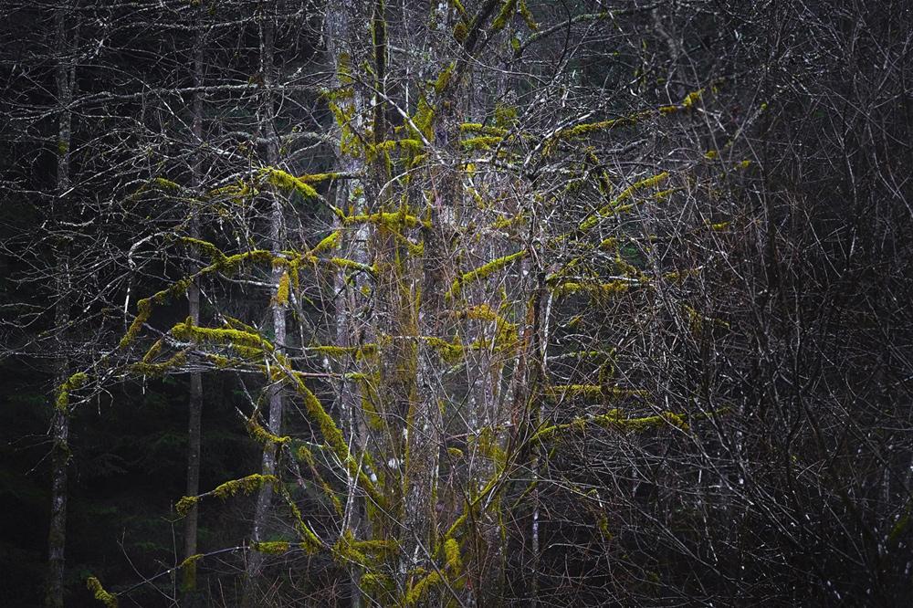 Kugelgeäst (Leica SL, Zeiss Sonnar 2,8/85mm)