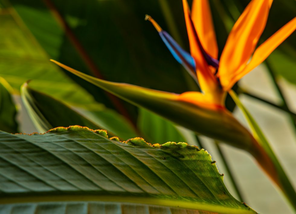 light at the rim of leaf