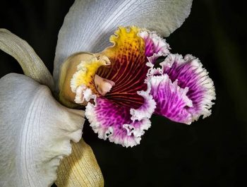 Focus Stacking And Its Application Within Macro Photography