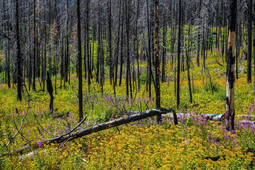 Burt trees and wildflowers