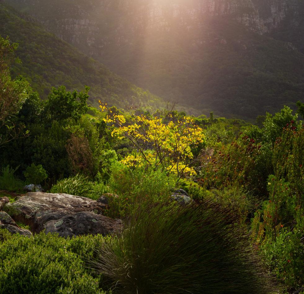 Light on the landscape