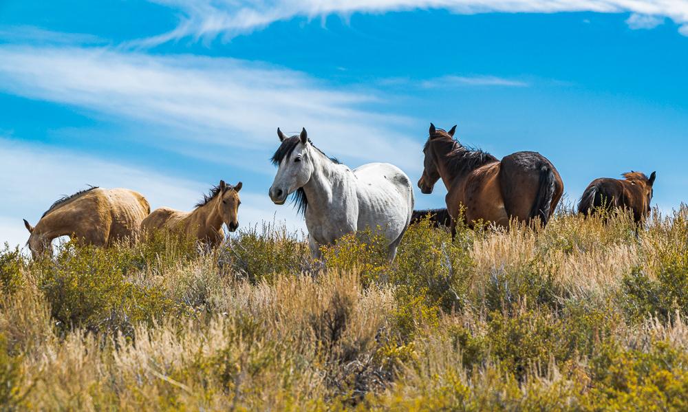"""Horses, High Desert Near Mono Lake, CA"" in color"