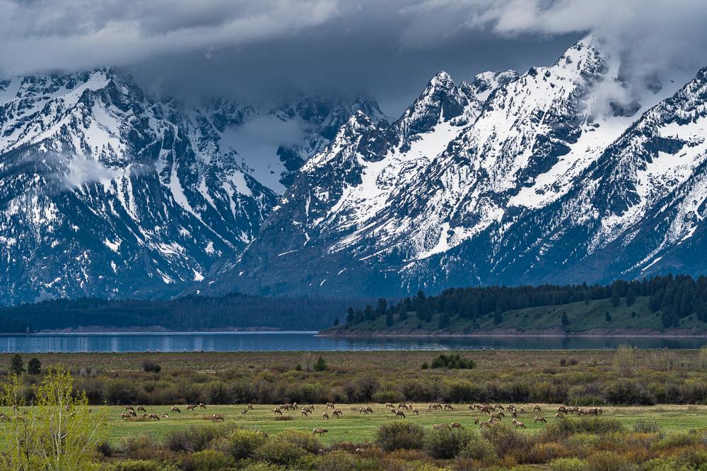 """""""Elk Migration, Teton NP"""" in color"""