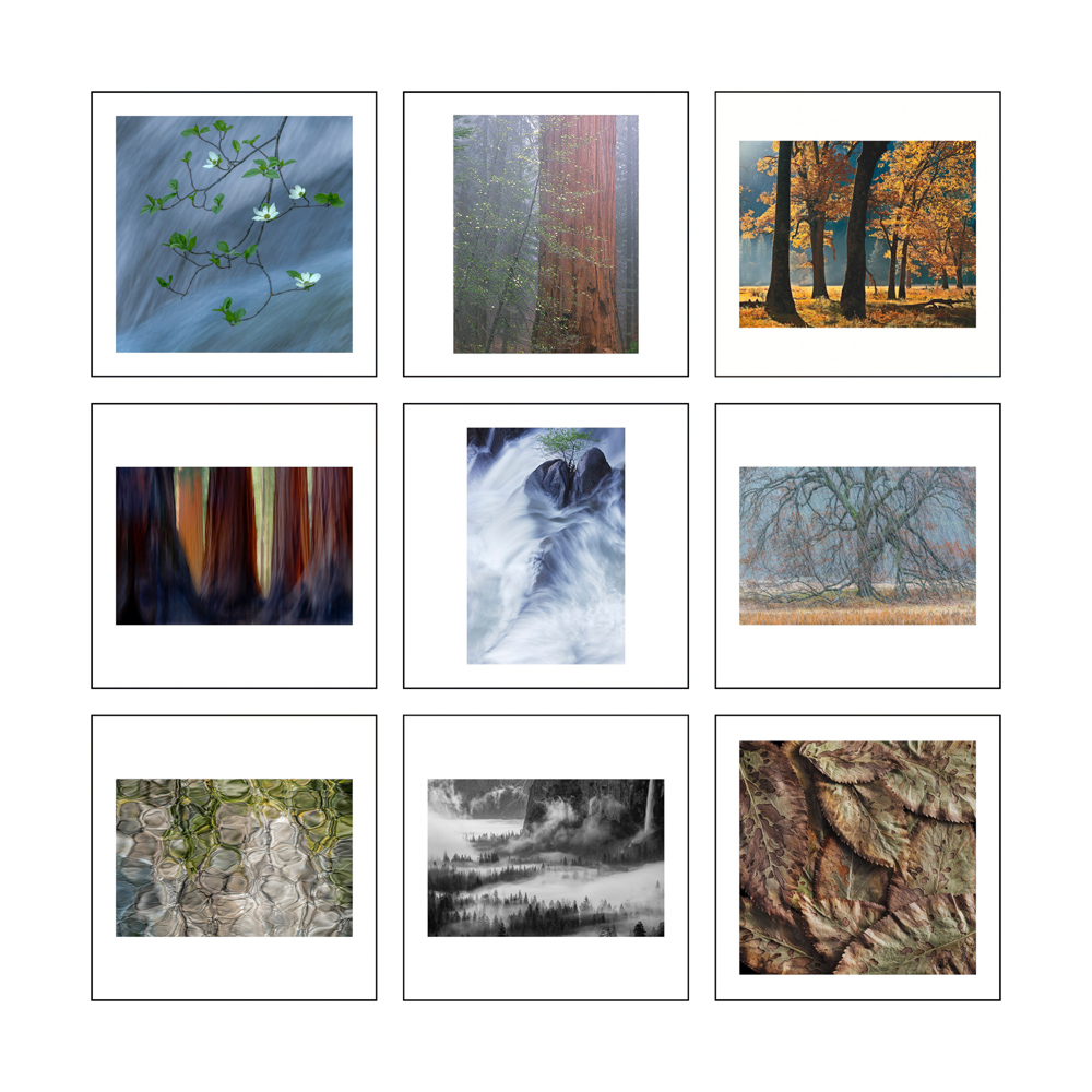 Some Of The Images In Light On The Landscape book