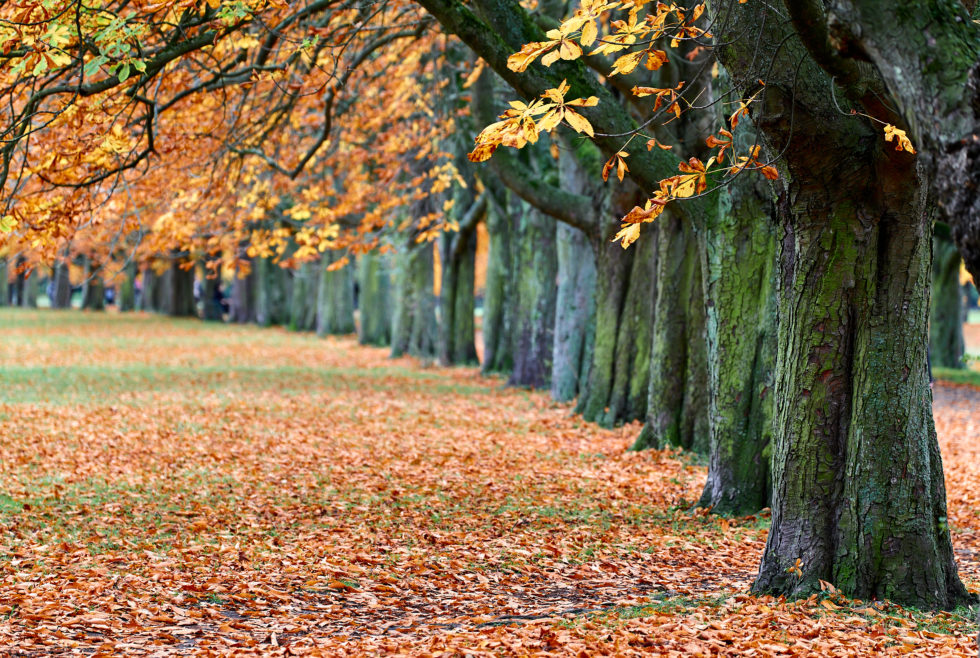 Autumn in Cologne