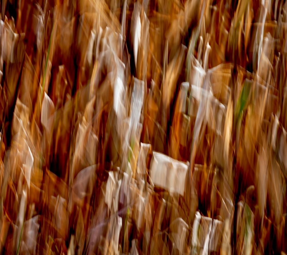 Camera movement of corn