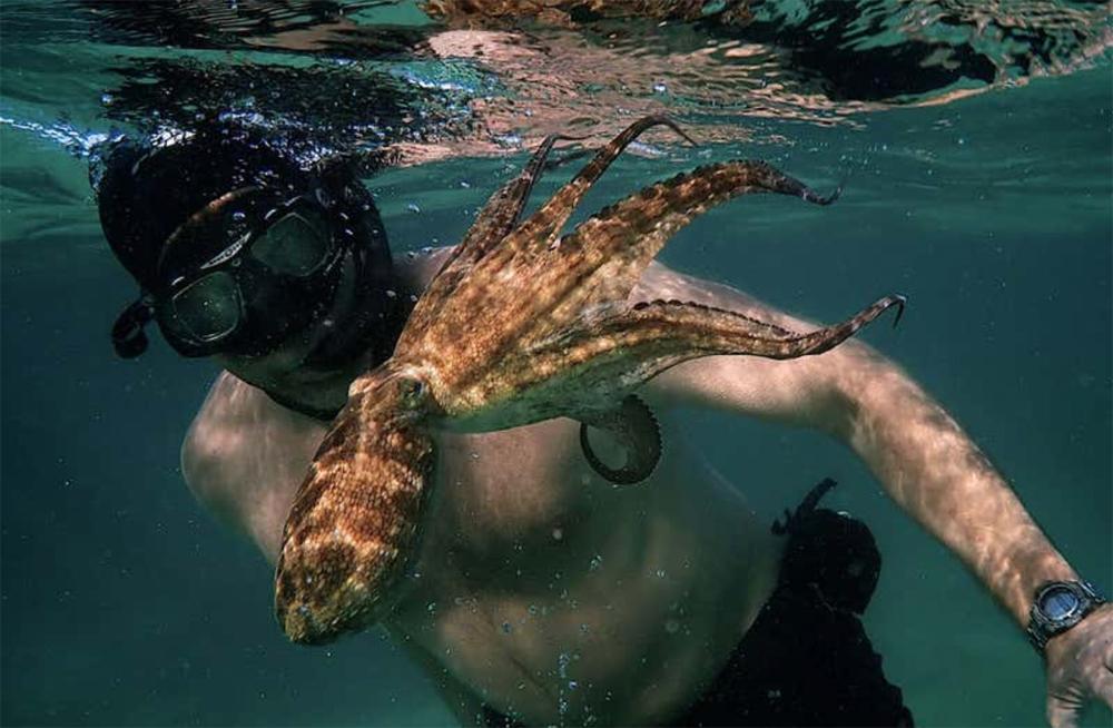 Octopus Teacher