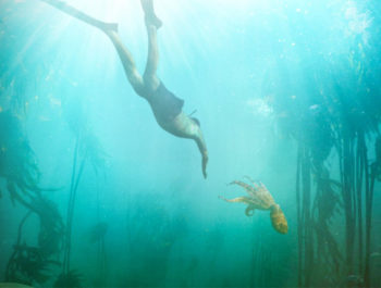 An Octopus Movie – I Haven't Stopped Thinking About It