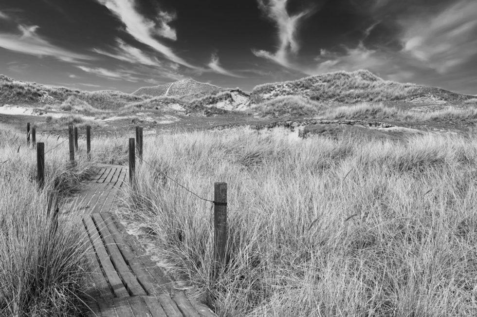 Dune landscape on the German North Sea island of Amrum
