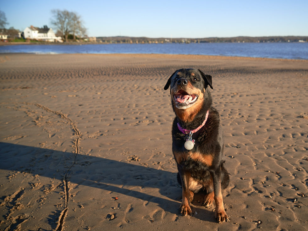 Izzy on the tidal flat