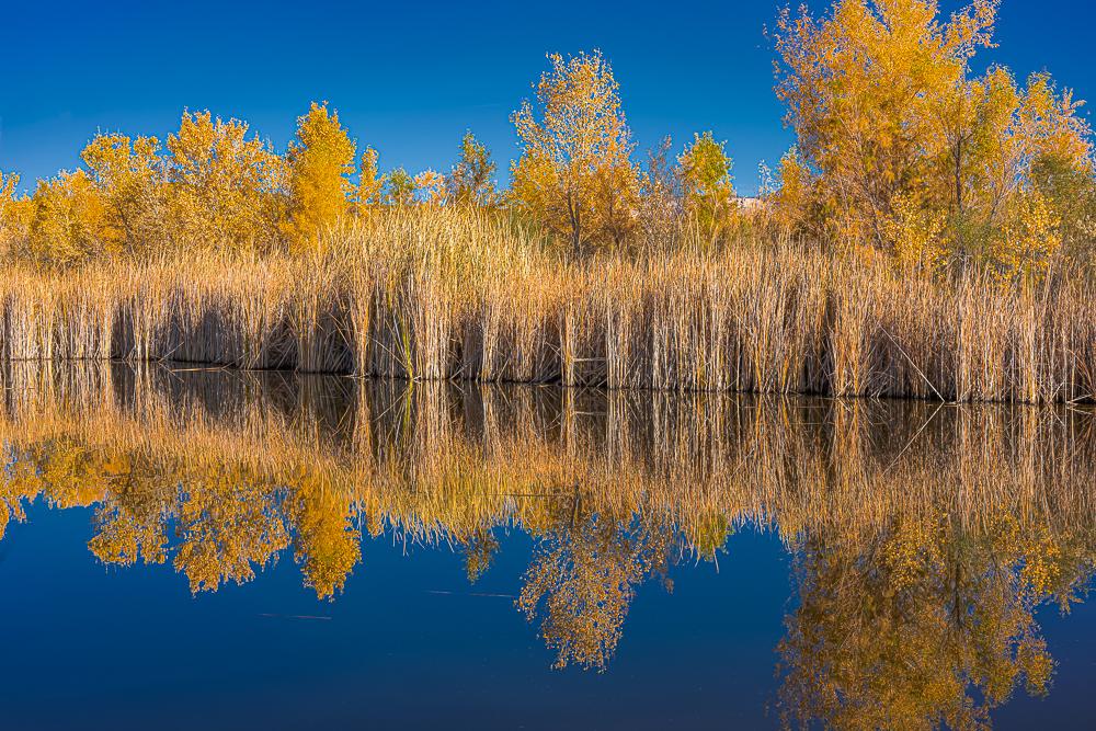 The Wetlands 3