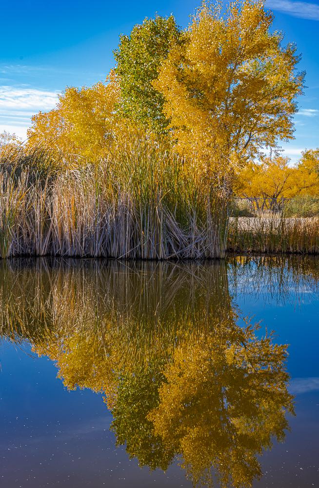 The Wetlands 4