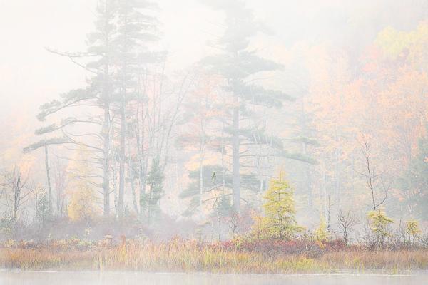 Round Pond shoreline