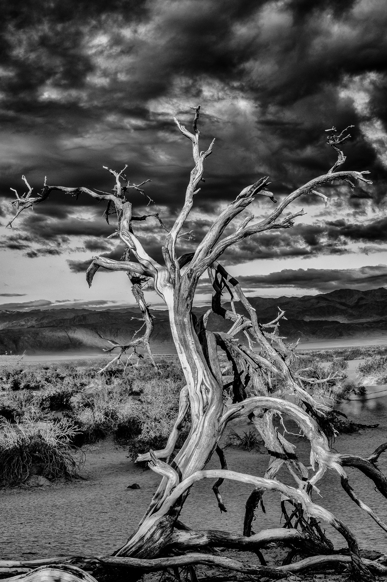 Death Valley Tree final