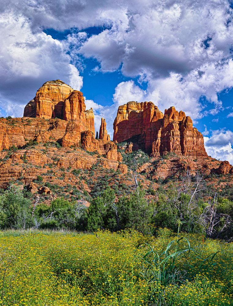 Cathedral Rock, Late Summer Bloom, Sedona, 4 x 4 Array