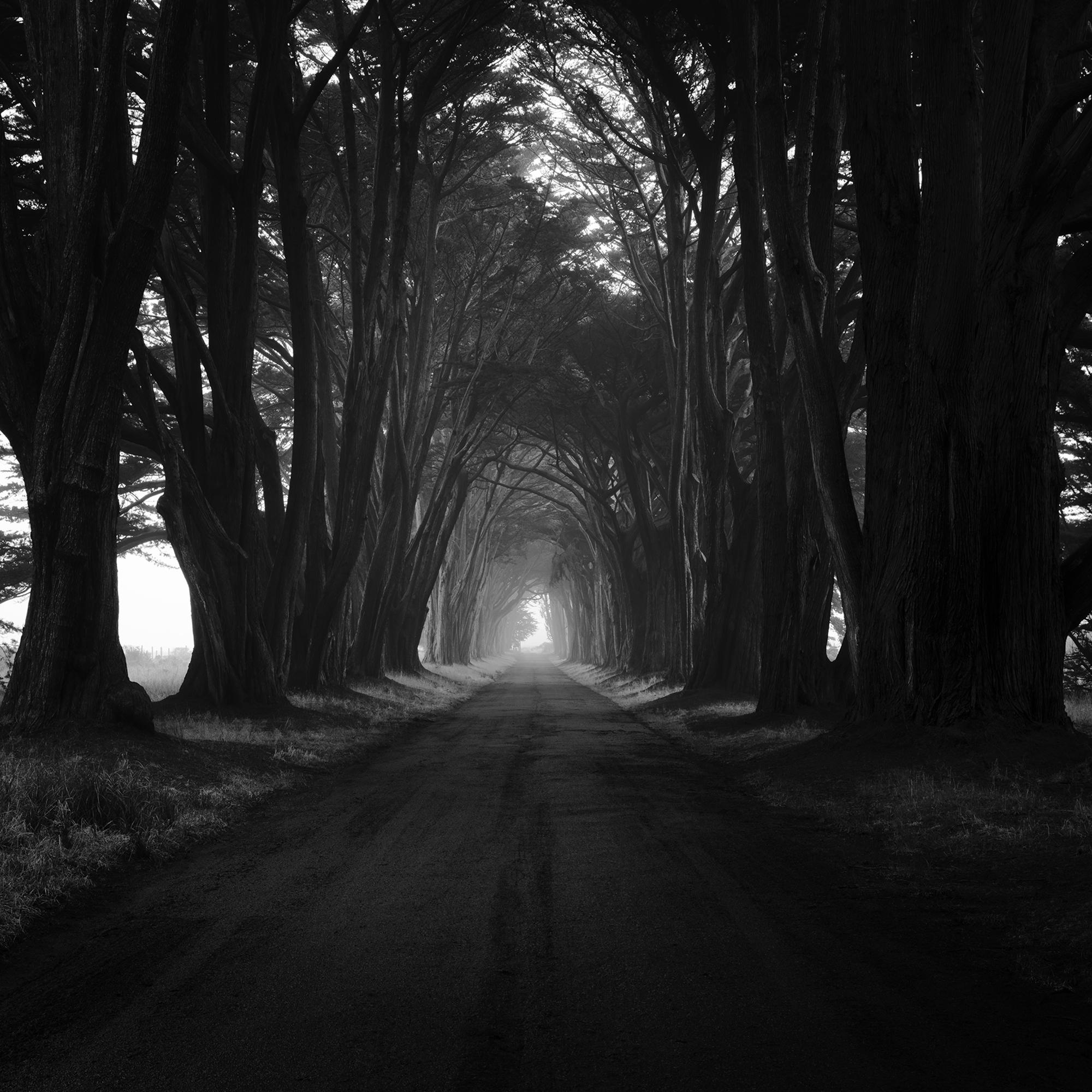 Cypress Tunnel