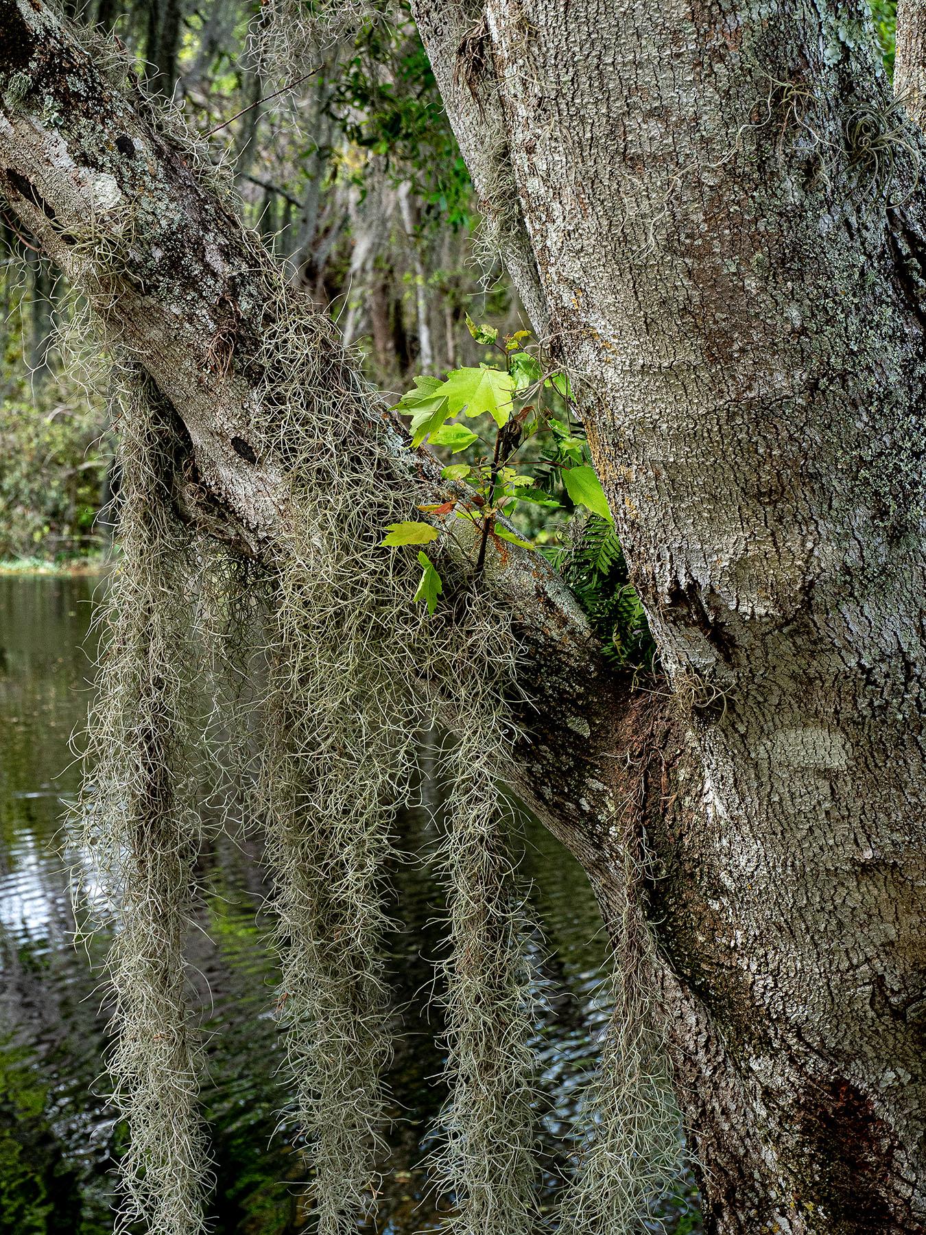Tree-Garden