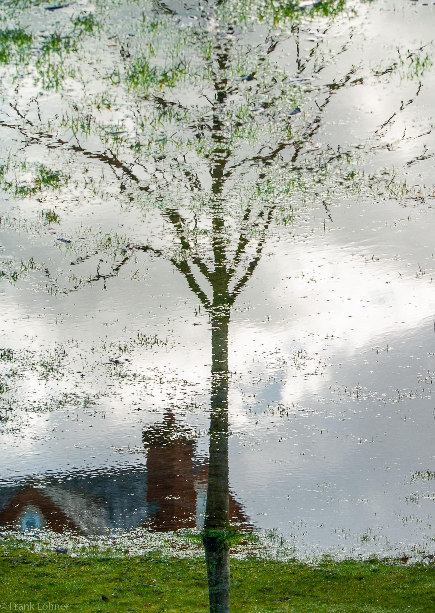 Tree-reflection