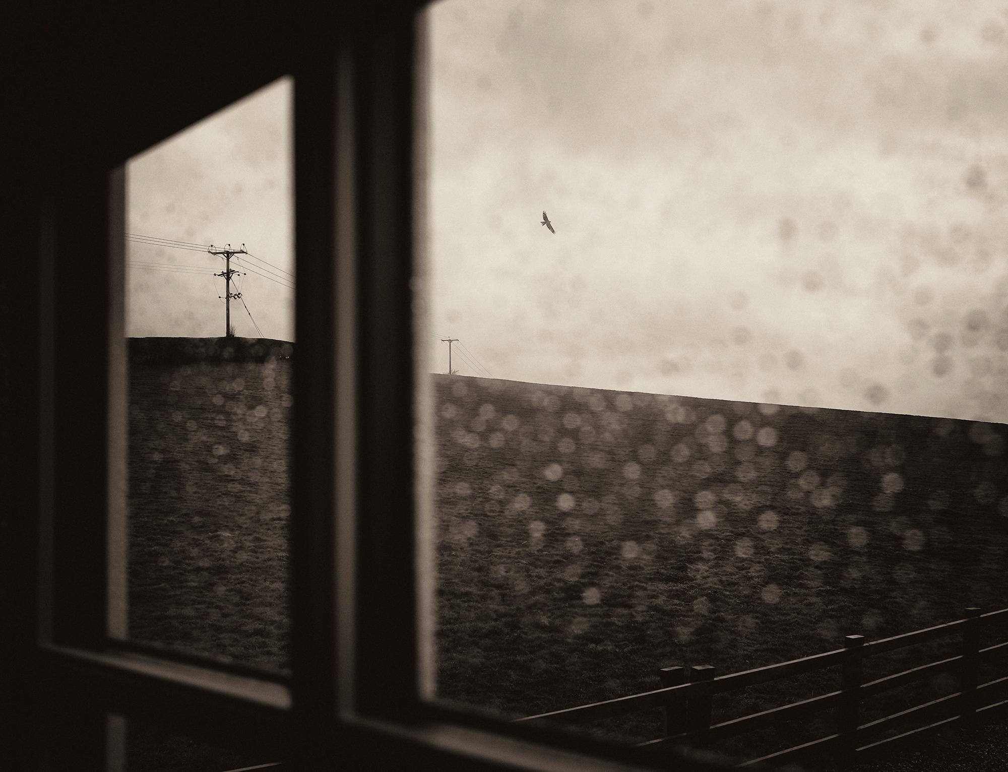 'Free Bird'