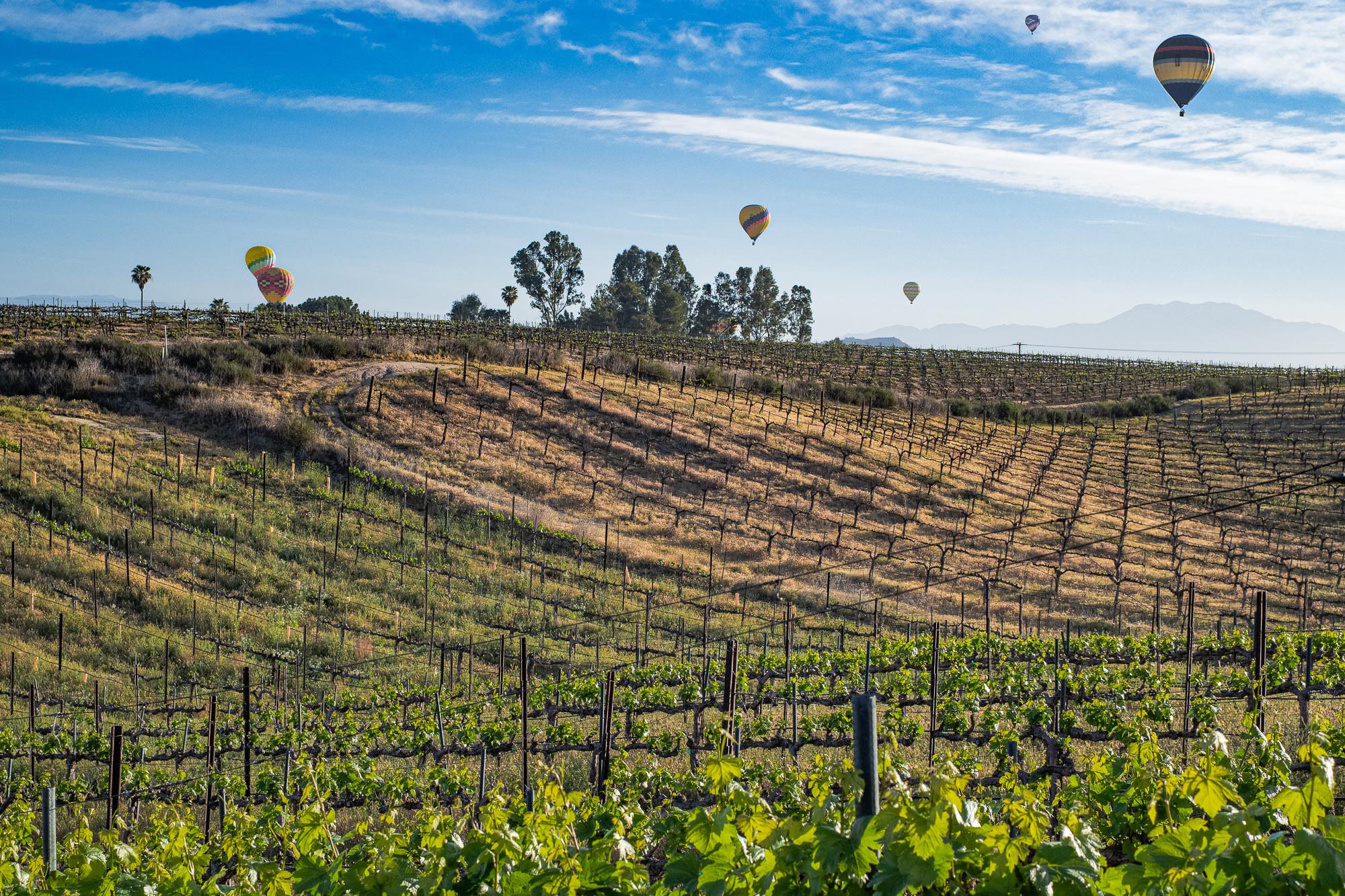 Hot Air Balloons above Vineyards, Temecula, CA