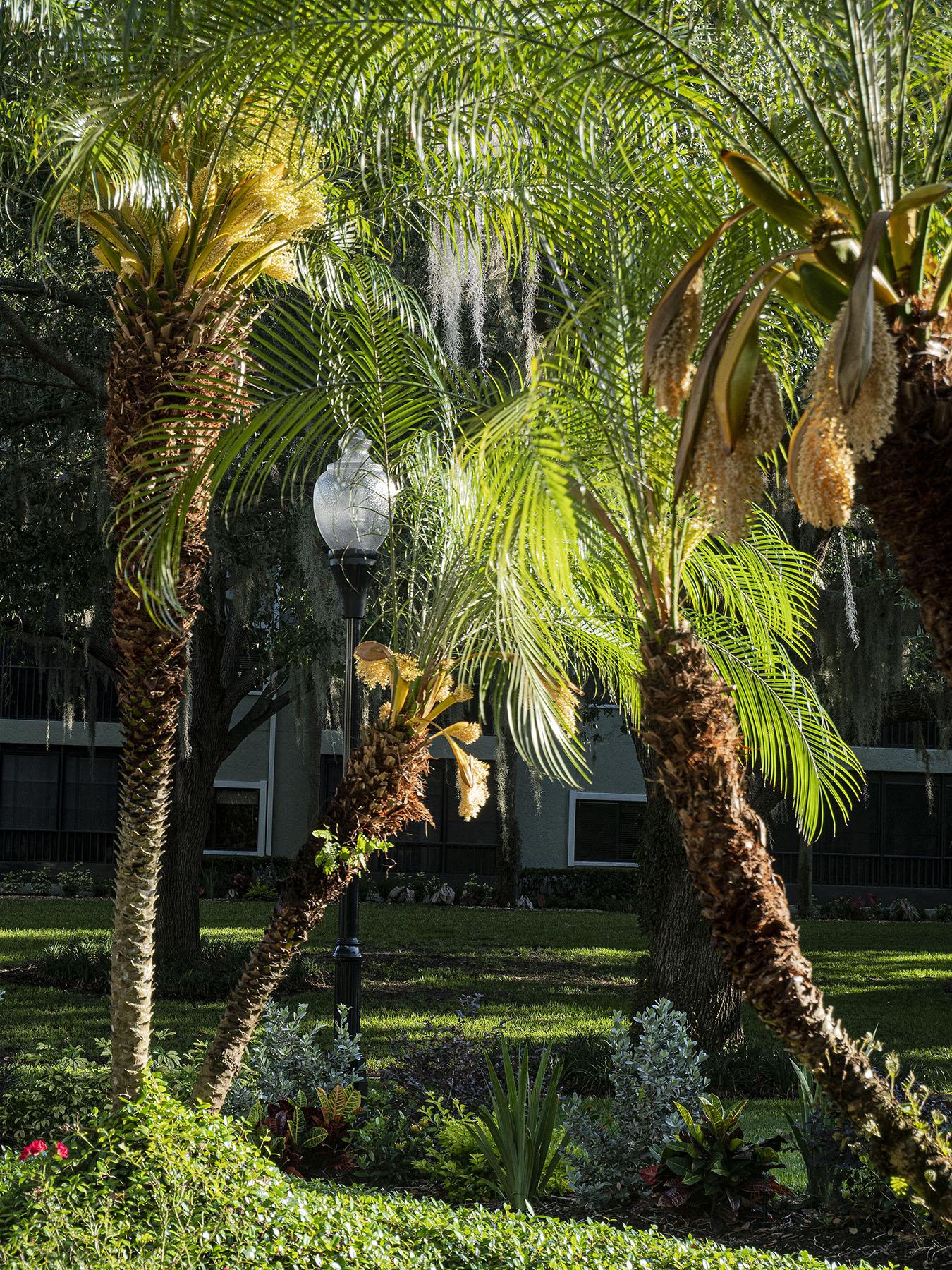 Sun-on-Palms