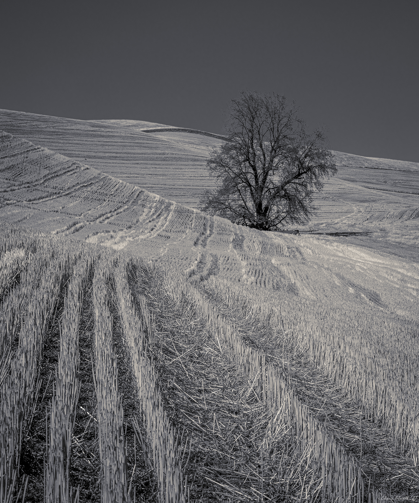 Strong lines in black and white offer a stark representation of this early period in the overall lifecycle of the agriculture of the Palouse.