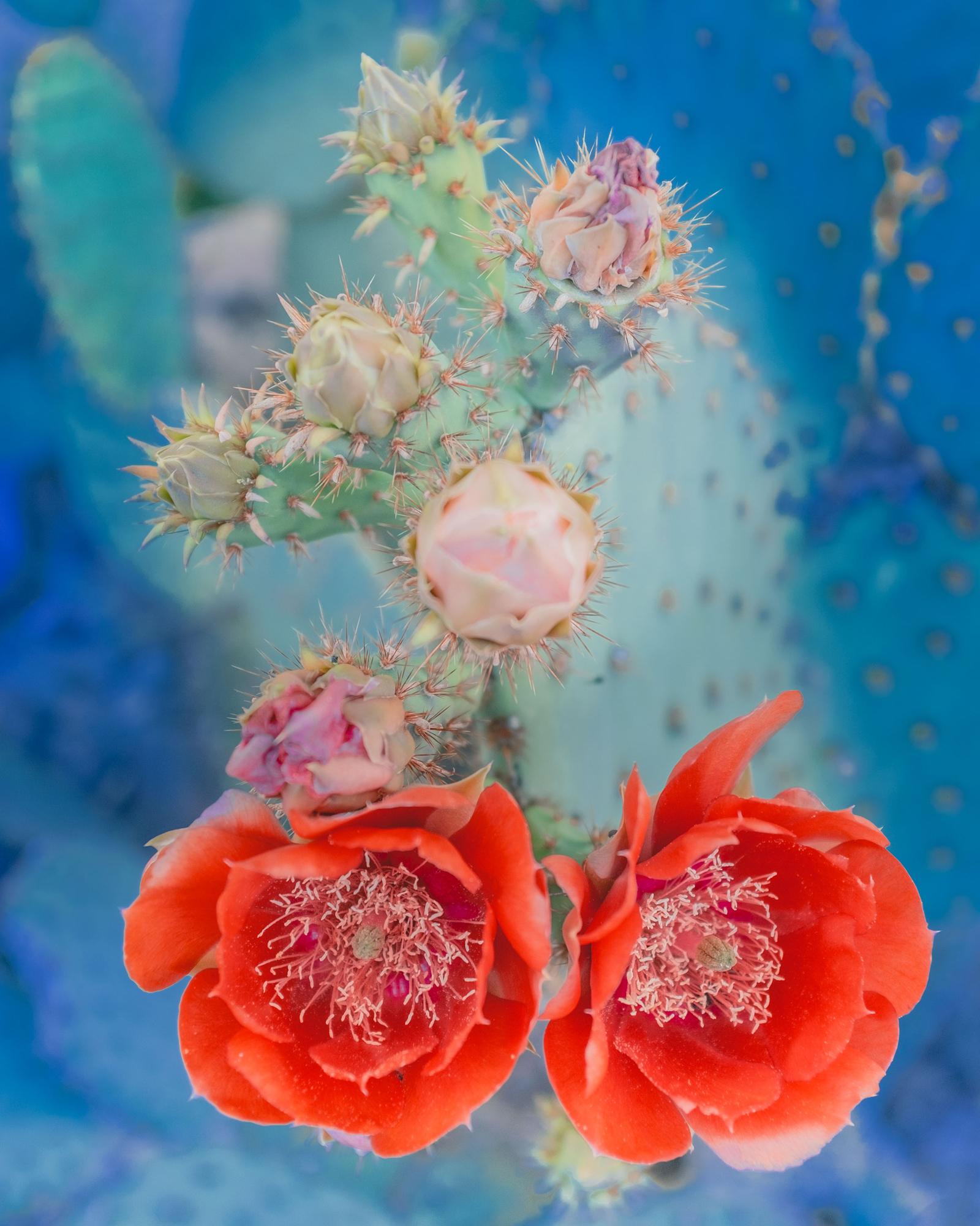 Desert Flowers #16