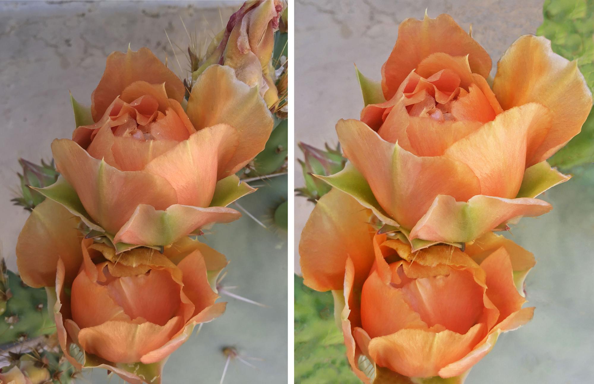 Desert Flowers 24
