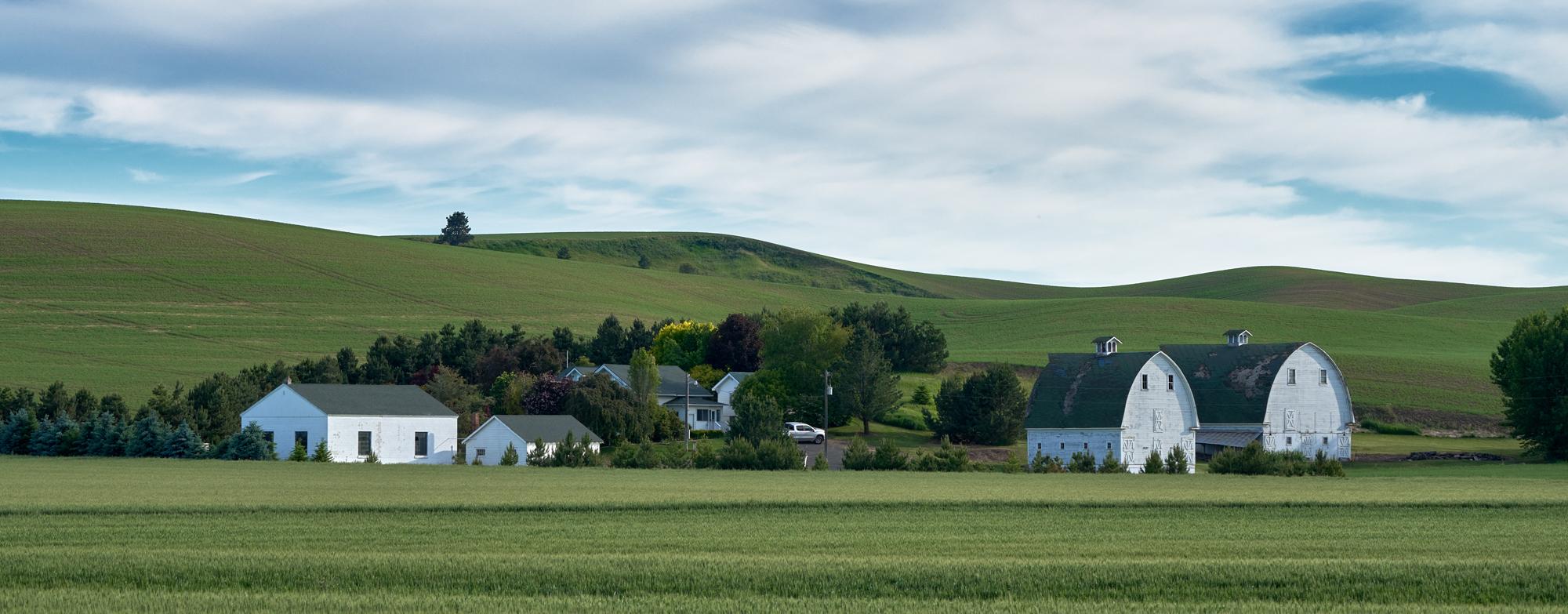 The Twin White barns farm