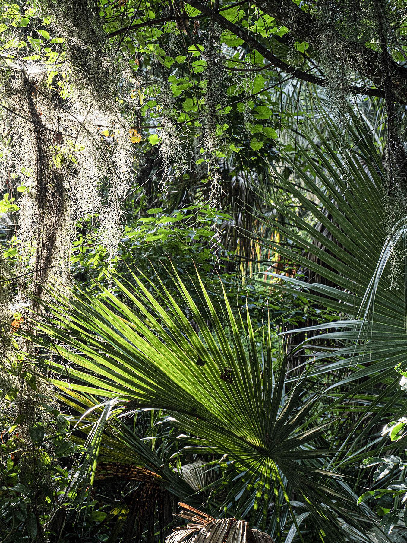 Palmettos-and-Moss